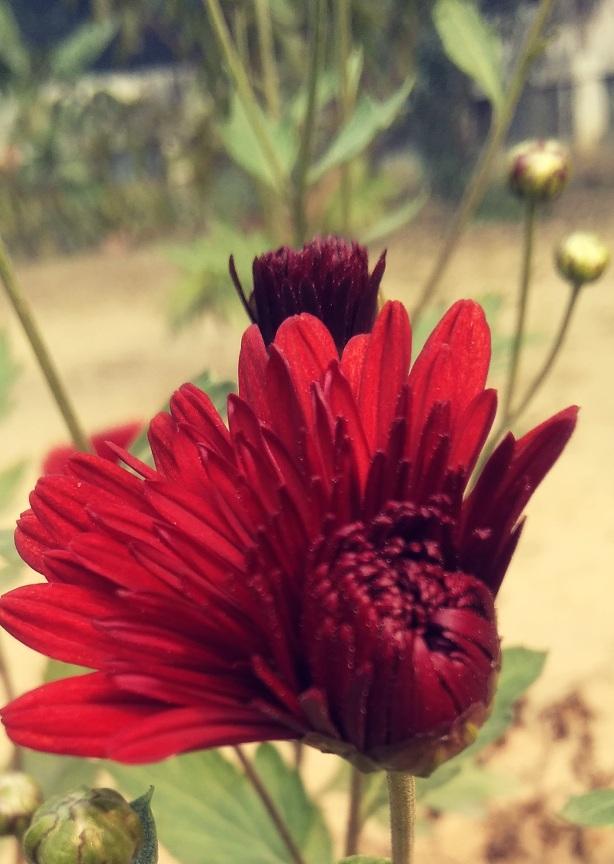 lakshmi_pandey