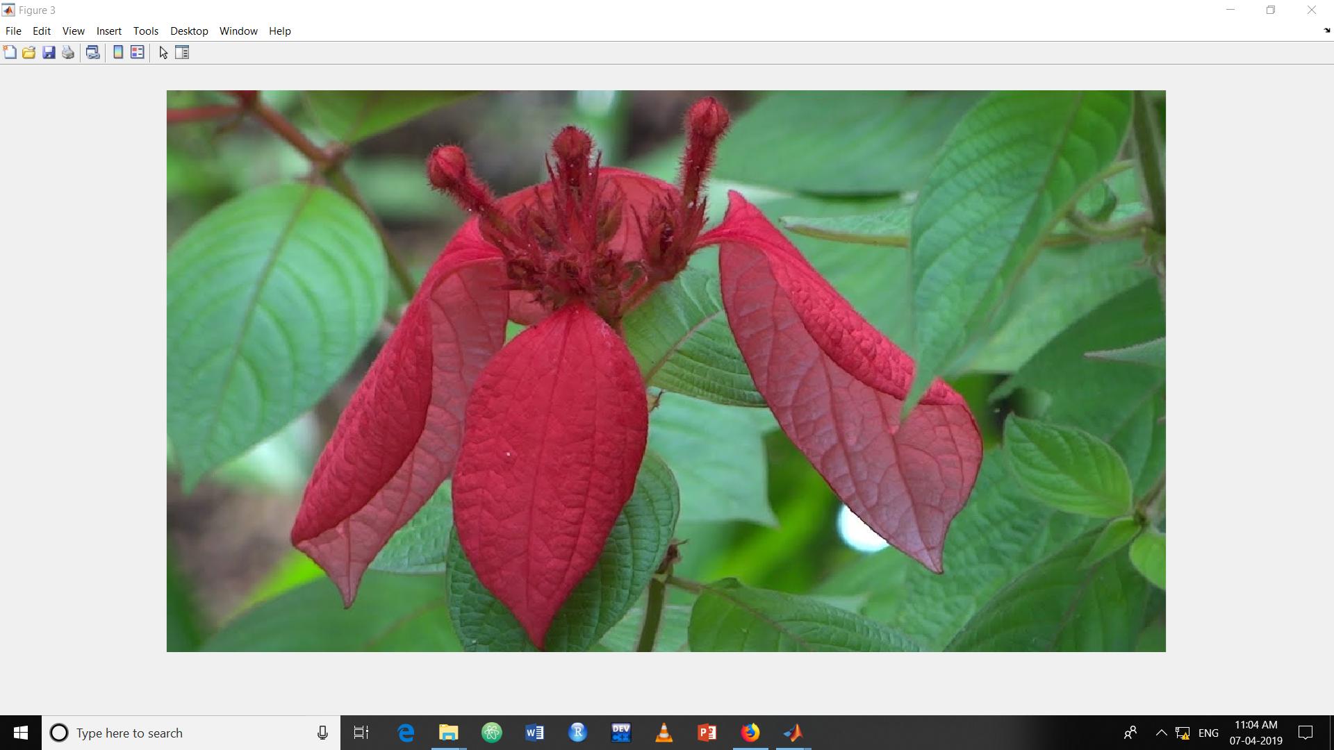 Image Complement in Matlab - GeeksforGeeks