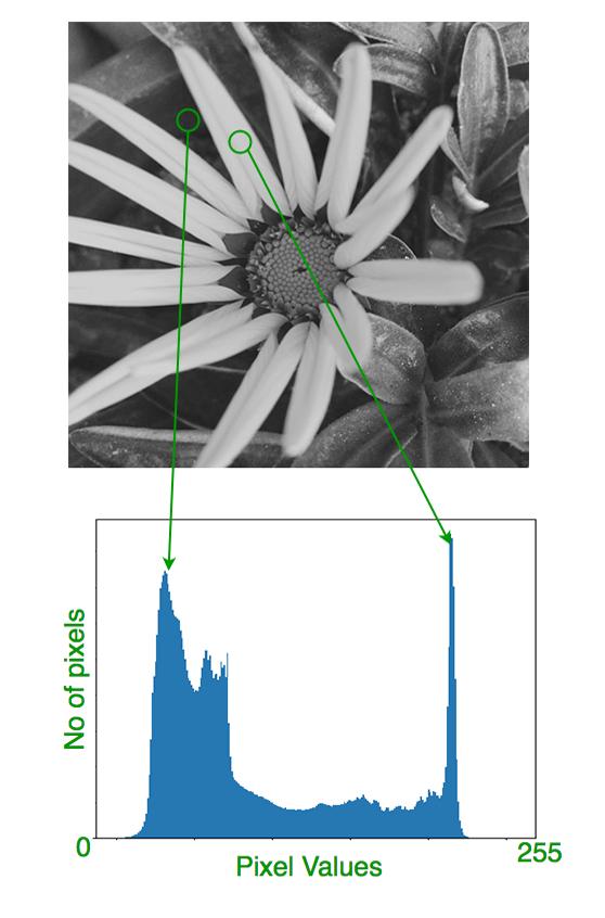 histogram_sample
